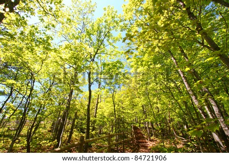 Beautiful spring foliage along the Escarpment Trail of Porcupine Mountains Wilderness State Park in Michigan - stock photo