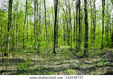 Beautiful spring forest. Beauty nature background - stock photo