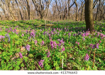 beautiful spring forest glade in a flowers - stock photo