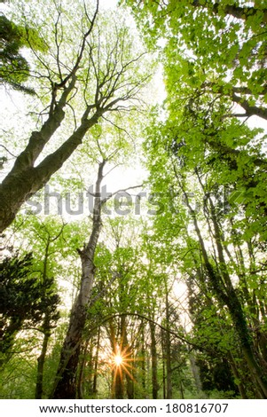 Beautiful spring forest on a sunny evening - stock photo