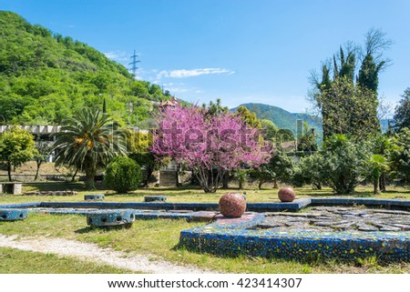 Beautiful spring landscape with a blooming rose tree in a Sunny day, Abkhazia - stock photo