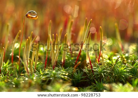 beautiful spring moss in the morning dew - stock photo