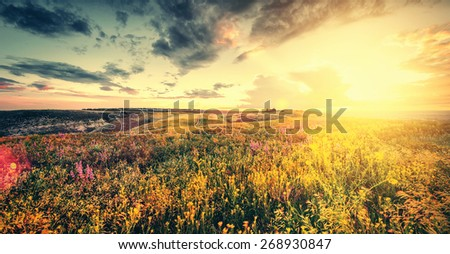 beautiful spring or summer filed with flowers on sunset, natural spring background - stock photo