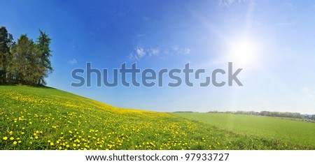 Beautiful spring panoramatic shot with a dandelion meadow - stock photo