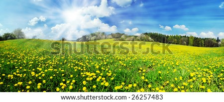 Beautiful spring panoramic shot with a dandelion meadow and shining sun - stock photo
