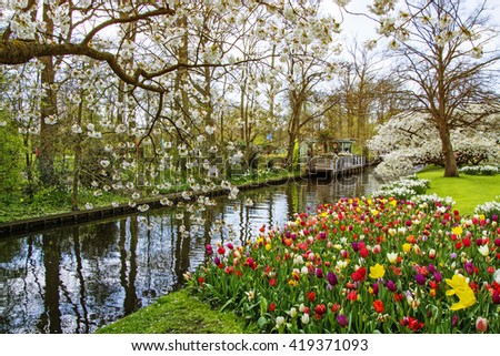 Beautiful spring park. Flowering Garden with colored tulips and blooming cherry and apple trees - stock photo