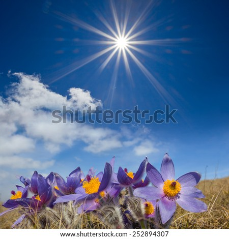 beautiful spring prairie scene - stock photo