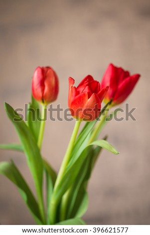Beautiful spring red tulips flowers in a vase - stock photo