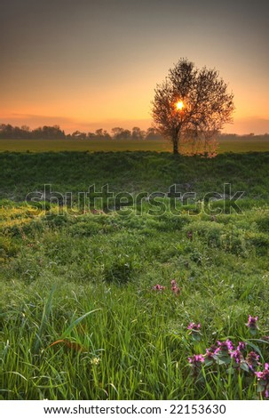Beautiful spring scenery with sun setting behind blossoming tree. - stock photo