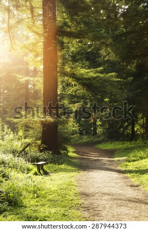 Beautiful Spring sunshine breaks through trees in forest landscape - stock photo