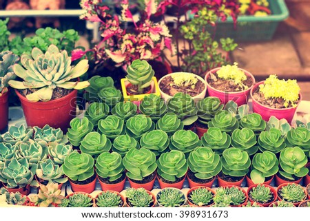 Beautiful Succulent Plant  - stock photo