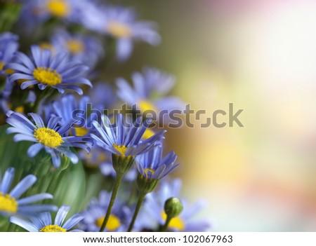 Beautiful summer daisies - stock photo