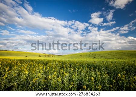 Beautiful summer field at sunny day - stock photo