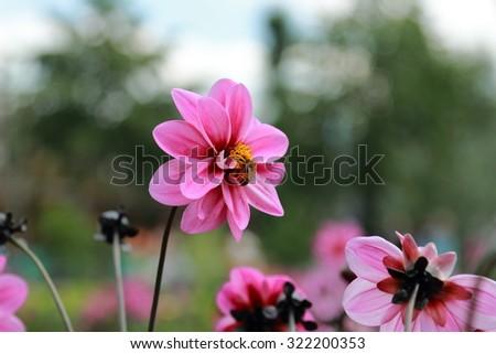 Beautiful summer garden in bloom - stock photo