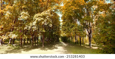 Beautiful summer green park with a footpath - stock photo