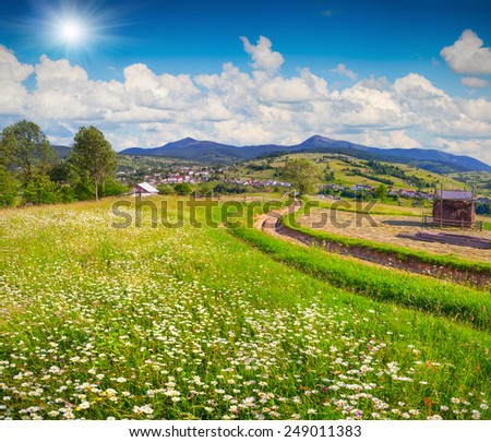 Beautiful summer landscape in the mountain village with a field of blossom camomiles and sun in the sky - stock photo