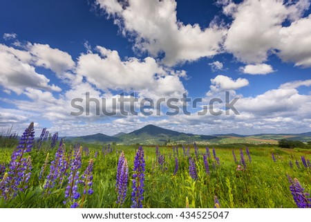 Beautiful summer landscape in the mountains. Green meadow - stock photo