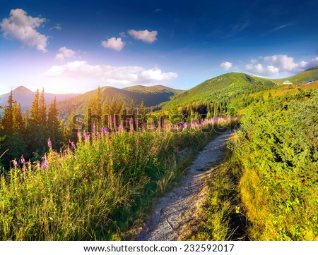 Beautiful summer landscape in the mountains with pink flowers. - stock photo