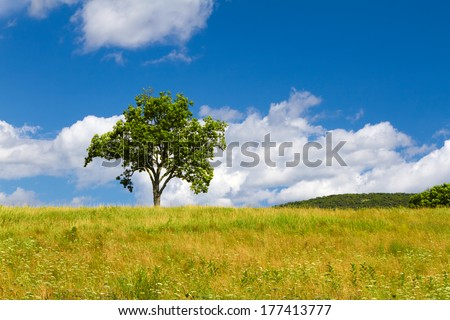 Beautiful summer landscape with a lonely tree  - stock photo