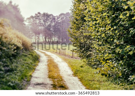 Beautiful summer landscape with country road - stock photo