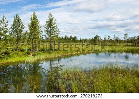 Beautiful summer landscape with forest, lake and swamp. Northern Finland, Lapland - stock photo