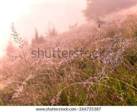 Beautiful summer macro dew background. - stock photo