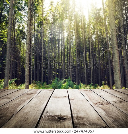 Beautiful summer pine forest and wood planks floor background - stock photo