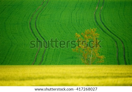 Beautiful summer rural landscape with plowed field curves and wheat grain. Rural landscape. Spring landscape. Beautiful countryside curve. Rural background. Abstract color curves with alone tree - stock photo