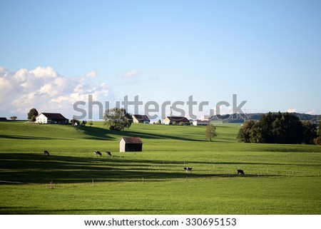 Beautiful summer sunny country landscape with cows on green grass meadow and provence buildings on horizon against bright blue sky with few low white clouds background, horizontal picture - stock photo