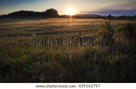 Beautiful summer sunset over the fields and forest - stock photo