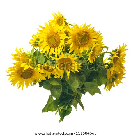 Beautiful sunflowers bouquet isolated on white background - stock photo