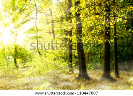 Beautiful sunlight in the autumn forest - stock photo