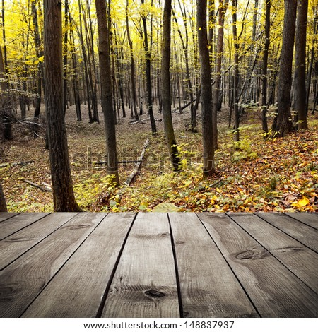 Beautiful sunlight in the autumn forest and wooden planks. Beauty nature background - stock photo