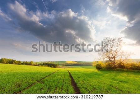 Beautiful sunny landscape - stock photo