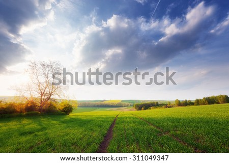 Beautiful sunny landscape - stock photo
