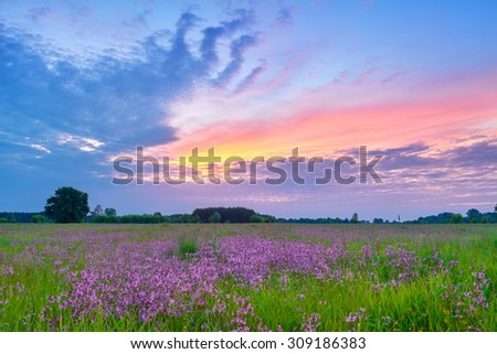 Beautiful sunrise countryside field flowers sky clouds landscape meadow Poland - stock photo
