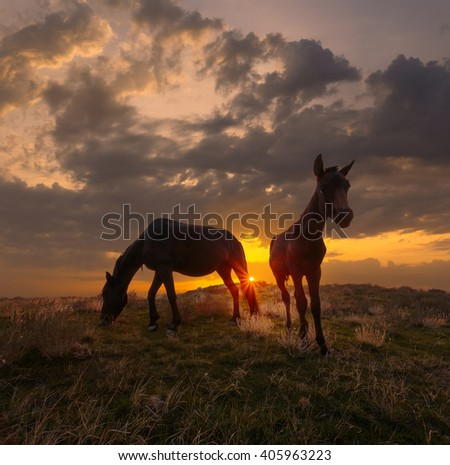 Beautiful sunrise landscape. Horse and foal on mountain pasture against dramatic sky. - stock photo