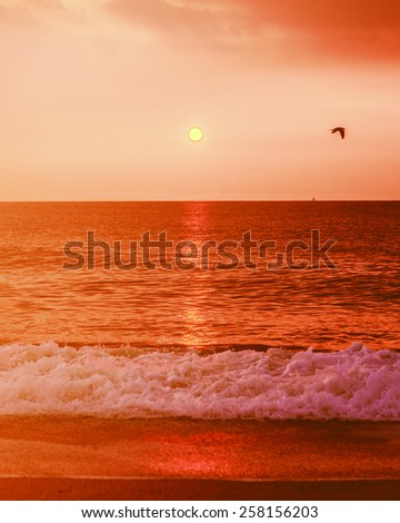 Beautiful sunrise on Sandy Hook Beach, New Jersey, USA. Scenic view over Atlantic ocean, sun, horizon and running waves, peaceful, lovely and dramatic. A bird flying on sky. Vintage filtered look.  - stock photo
