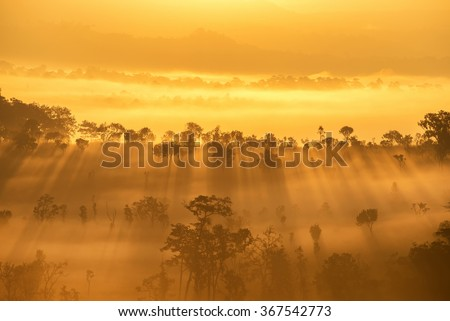 Beautiful sunrise scene with misty in morning in forest valley in khao kor mountain - stock photo