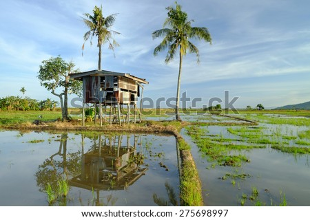 Beautiful sunrise with old hut in the middle paddy field at the background in Kota Belud, Sabah, East Malaysia, Borneo - stock photo