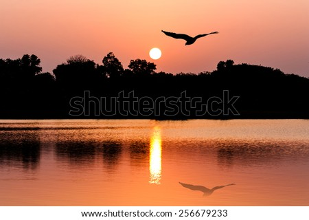 beautiful sunset and Silhouette eagle bird at river - stock photo