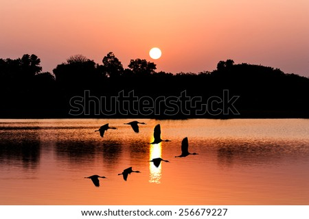 beautiful sunset and Silhouette teal  bird at river - stock photo