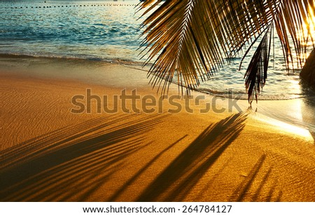 Beautiful sunset at Seychelles beach with palm tree shadow over sand - stock photo