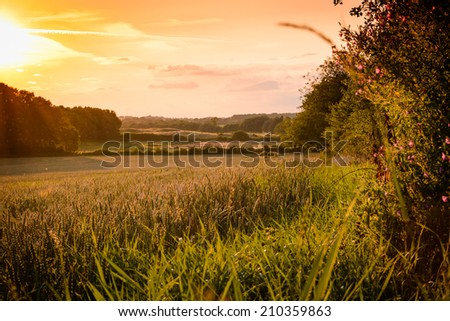 Beautiful sunset in a field of grain - stock photo