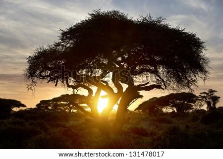 Beautiful sunset in Amboseli National Park 08 - stock photo