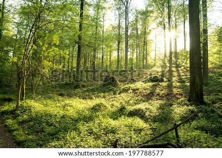 beautiful sunset in sonian  forest  - stock photo