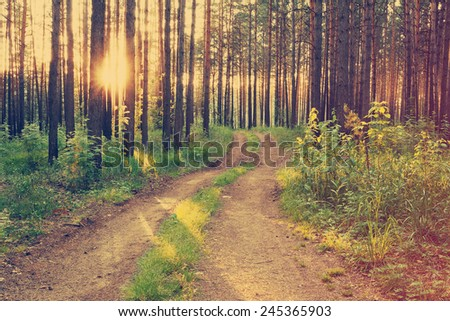 beautiful sunset in the forest, dirty road, retro film filtered, instagram style  - stock photo