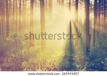 beautiful sunset in the forest, retro film filtered, instagram style  - stock photo