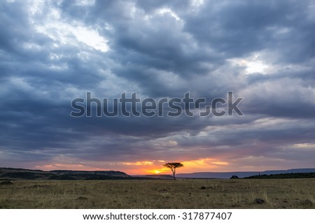 Beautiful sunset in the savannah of Masai Mara National Park in Kenya, Africa - stock photo