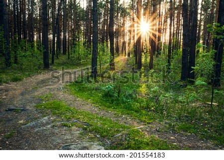 beautiful sunset in the woods  - stock photo